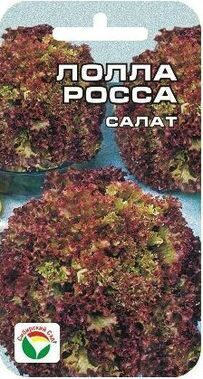Салат Лолло-Росса /Сиб сад/